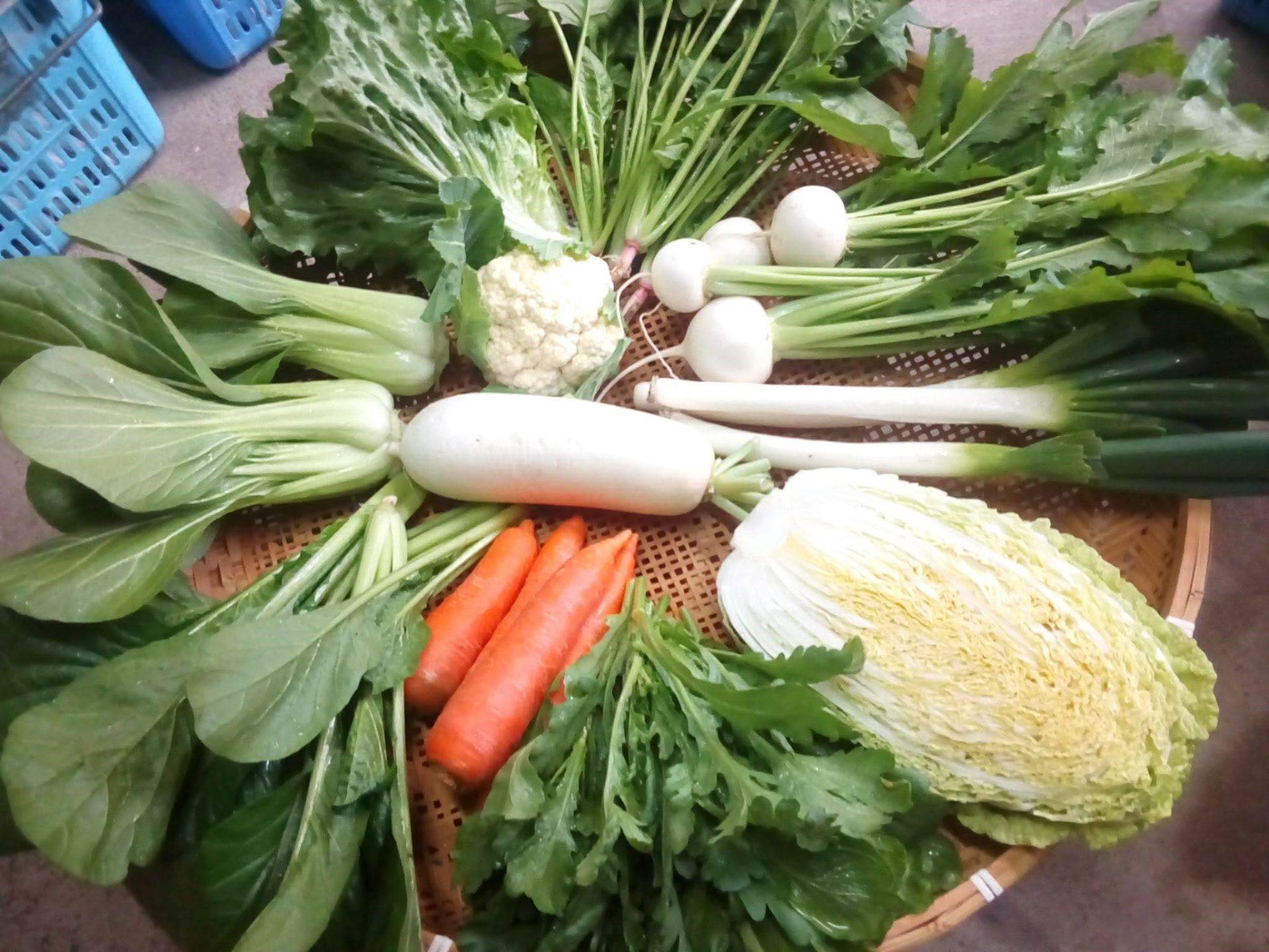 野菜セット定期購入新規会員募集中